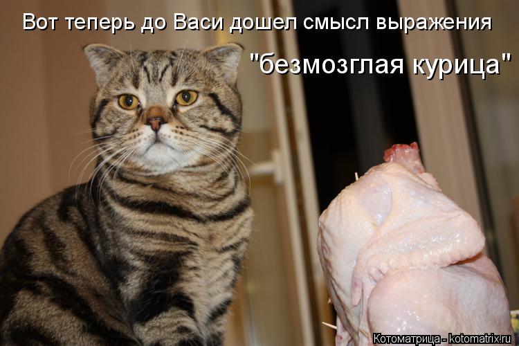 """Котоматрица: Вот теперь до Васи дошел смысл выражения """"безмозглая курица"""""""