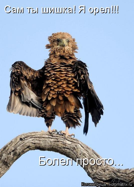 Котоматрица: Сам ты шишка! Я орел!!! Болел просто...
