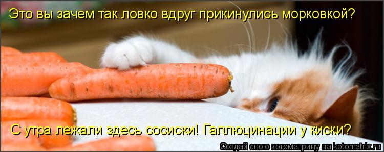 Котоматрица: Это вы зачем так ловко вдруг прикинулись морковкой? С утра лежали здесь сосиски! Галлюцинации у киски?