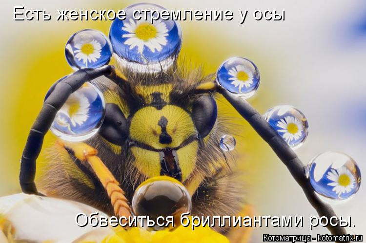 Котоматрица: Есть женское стремление у осы Обвеситься бриллиантами росы.