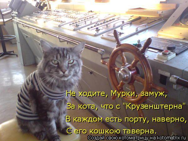 """Котоматрица: В каждом есть порту, наверно, С его кошкою таверна. За кота, что с """"Крузенштерна"""" Не ходите, Мурки, замуж,"""