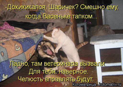 Котоматрица: -Дохихикался, Шаричек? Смешно ему,  когда Васеньке тапком... Ладно, там ветеринара вызвали. Для тебя, наверное.  Челюсть вправлять будут.