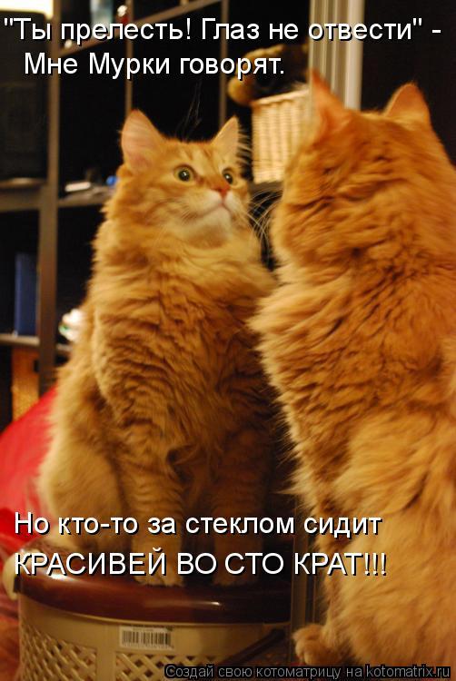 """Котоматрица: """"Ты прелесть! Глаз не отвести"""" - Мне Мурки говорят. Но кто-то за стеклом сидит КРАСИВЕЙ ВО СТО КРАТ!!!"""