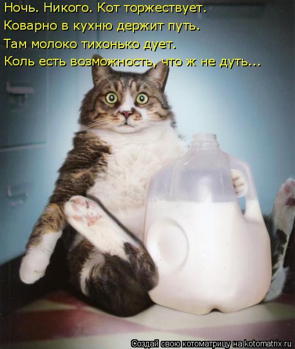 Котоматрица: Ночь. Никого. Кот торжествует. Коварно в кухню держит путь. Там молоко тихонько дует. Коль есть возможность, что ж не дуть...