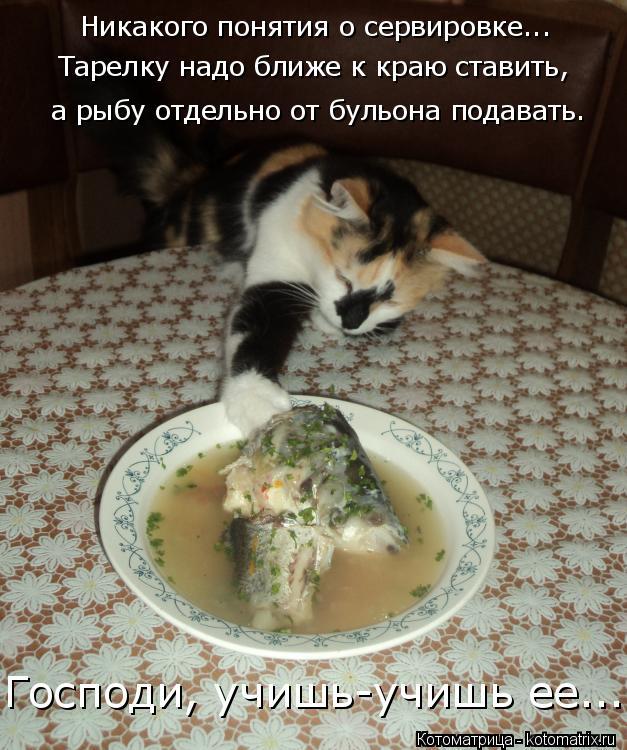 Котоматрица: Никакого понятия о сервировке... Тарелку надо ближе к краю ставить,  а рыбу отдельно от бульона подавать. Господи, учишь-учишь ее...