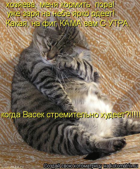 Котоматрица: уже заря на небе ярко рдеет! Какая, на фиг, КАМА вам С УТРА,  когда Васек стремительно худеет?!!!!! хозяева, меня кормить  пора!