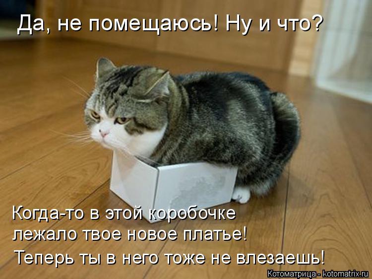 Котоматрица: Да, не помещаюсь! Ну и что? Когда-то в этой коробочке  лежало твое новое платье! Теперь ты в него тоже не влезаешь!