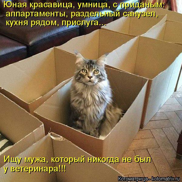 Котоматрица: Юная красавица, умница, с приданым:  аппартаменты, раздельный санузел, кухня рядом, прислуга... Ищу мужа, который никогда не был у ветеринара!!