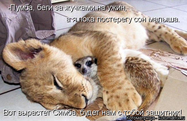 Котоматрица: -Пумба, беги за жучками на ужин, а я пока постерегу сон малыша. Вот вырастет Симба, будет нам с тобой защитник!