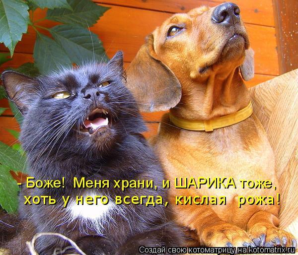 Котоматрица: - Боже!  Меня храни, и ШАРИКА тоже, хоть у него всегда, кислая  рожа!