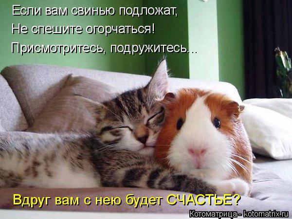 Котоматрица: Если вам свинью подложат, Не спешите огорчаться! Присмотритесь, подружитесь... Вдруг вам с нею будет СЧАСТЬЕ?