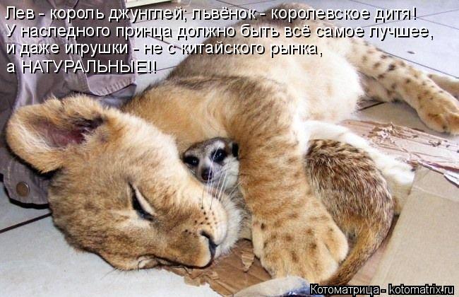 Котоматрица: Лев - король джунглей; львёнок - королевское дитя!  У наследного принца должно быть всё самое лучшее, и даже игрушки - не с китайского рынка,  а