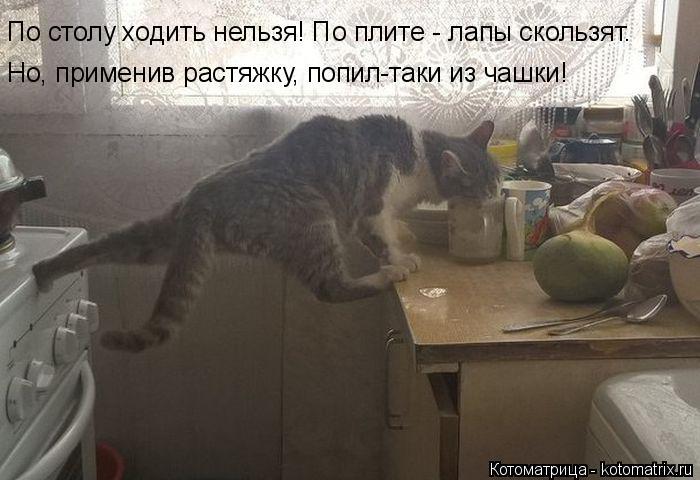 Котоматрица: По столу ходить нельзя! По плите - лапы скользят. Но, применив растяжку, попил-таки из чашки!