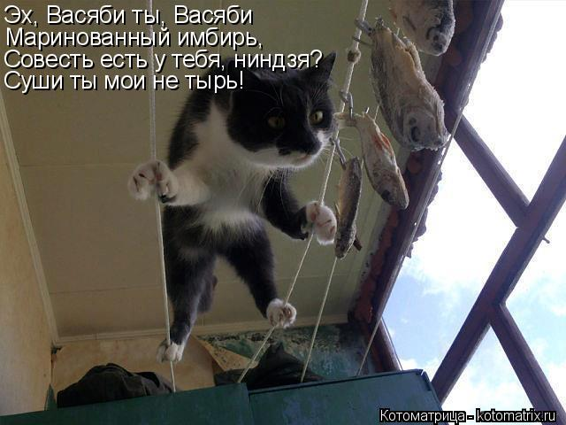 Котоматрица: Эх, Васяби ты, Васяби Маринованный имбирь, Совесть есть у тебя, ниндзя? Суши ты мои не тырь!