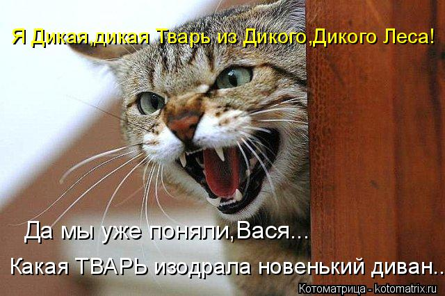 Котоматрица: Я Дикая,дикая Тварь из Дикого,Дикого Леса! Да мы уже поняли,Вася... Какая ТВАРЬ изодрала новенький диван...