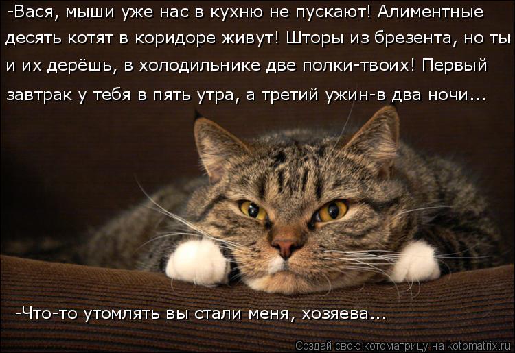 Котоматрица: -Вася, мыши уже нас в кухню не пускают! Алиментные  десять котят в коридоре живут! Шторы из брезента, но ты  и их дерёшь, в холодильнике две пол