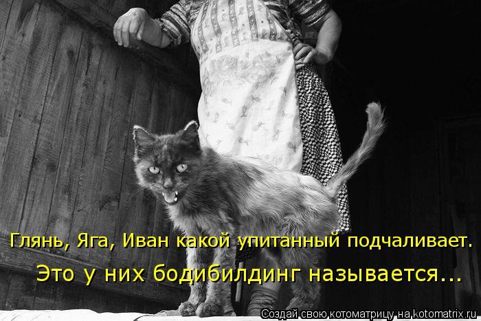 Котоматрица: Это у них бодибилдинг называется... Глянь, Яга, Иван какой упитанный подчаливает.