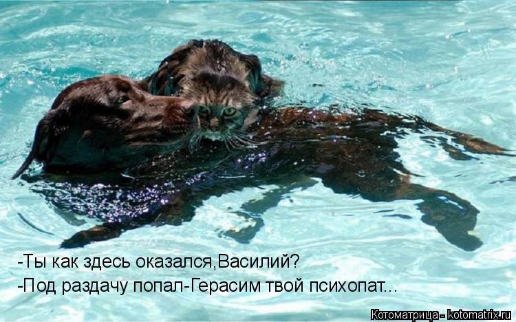 Котоматрица: -Ты как здесь оказался,Василий? -Под раздачу попал-Герасим твой психопат...