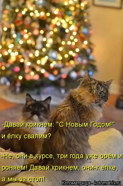 """Котоматрица: и ёлку свалим? -Давай крикнем: """"С Новым Годом!""""  -Не, они в курсе, три года уже орём и  роняем! Давай крикнем, они-к ёлке, а мы за стол!"""