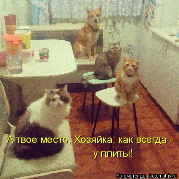 Котоматрица: А твое место, Хозяйка, как всегда - у плиты!