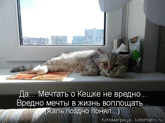 Котоматрица: Да... Мечтать о Кешке не вредно... (жаль,поздно понял...) Вредно мечты в жизнь воплощать...