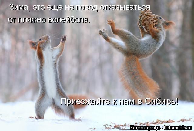 Котоматрица: Зима, это еще не повод отказываться от пляжно волейбола. Приезжайте к нам в Сибирь!