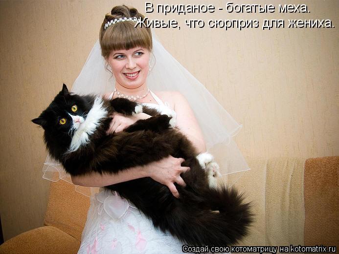 Котоматрица: В приданое - богатые меха. Живые, что сюрприз для жениха.