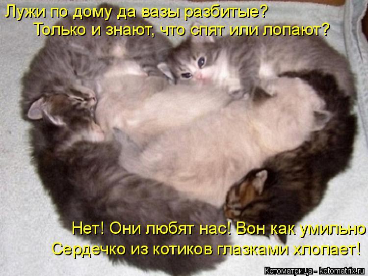 Котоматрица: Лужи по дому да вазы разбитые? Только и знают, что спят или лопают? Нет! Они любят нас! Вон как умильно Сердечко из котиков глазками хлопает!