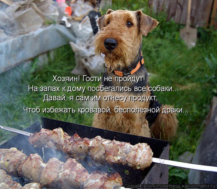 Котоматрица: Хозяин! Гости не пройдут! Давай, я сам им отнесу продукт, На запах к дому посбегались все собаки... Чтоб избежать кровавой, бесполезной драки..