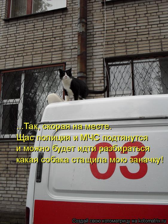 Котоматрица: ...Так, скорая на месте. Щас полиция и МЧС подтянутся и можно будет идти разбираться какая собака стащила мою заначку!