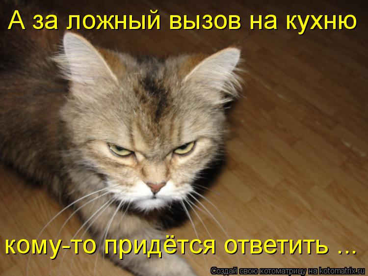 Котоматрица: А за ложный вызов на кухню кому-то придётся ответить ...