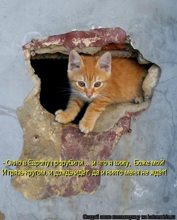 Котоматрица: - Окно в Европу прорубили...  и что я вижу,  Боже мой! И грязь кругом, и дождь идёт, да и никто меня не ждёт! И грязь кругом, и дождь идёт, да и никт