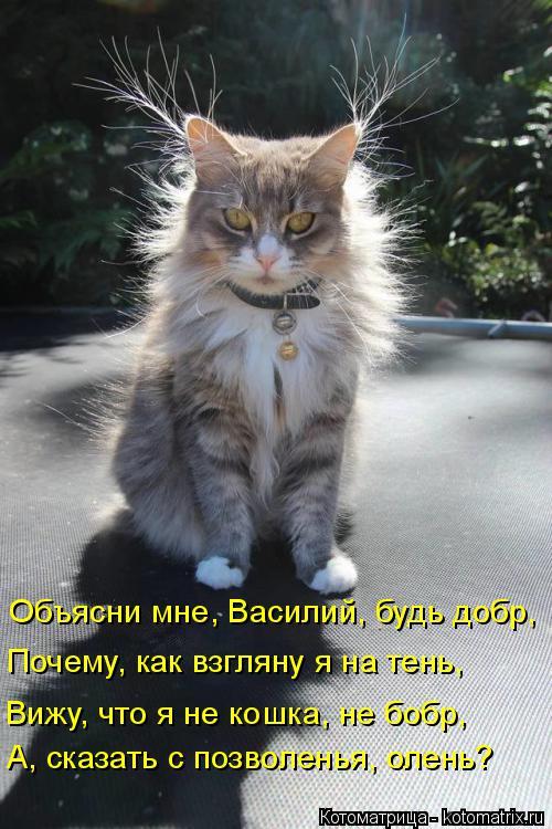 Котоматрица: Объясни мне, Василий, будь добр, Почему, как взгляну я на тень, Вижу, что я не кошка, не бобр, А, сказать с позволенья, олень?