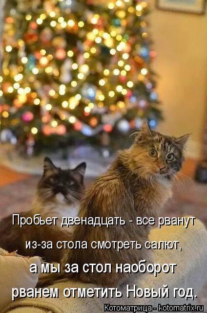 Котоматрица: Пробьет двенадцать - все рванут из-за стола смотреть салют, а мы за стол наоборот рванем отметить Новый год.