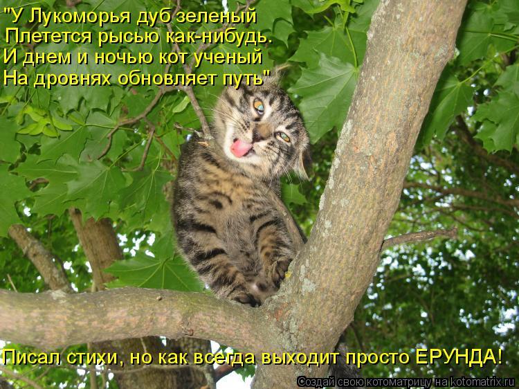 """Котоматрица: """"У Лукоморья дуб зеленый Плетется рысью как-нибудь. И днем и ночью кот ученый На дровнях обновляет путь"""" Писал стихи, но как всегда выходит п"""