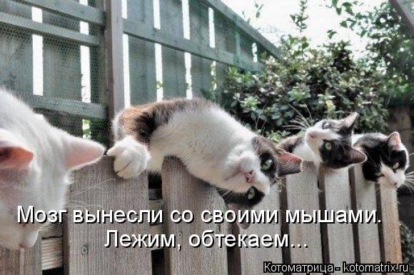 Котоматрица: Мозг вынесли со своими мышами. Лежим, обтекаем...