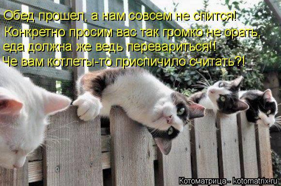 Котоматрица: Обед прошел, а нам совсем не спится! Конкретно просим вас так громко не орать, еда должна же ведь перевариться!! Че вам котлеты-то приспичило