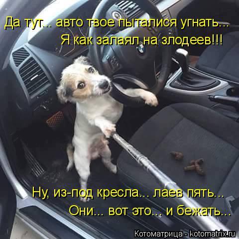 Котоматрица: Да тут... авто твое пыталися угнать... Я как залаял на злодеев!!! Ну, из-под кресла... лаев пять... Они... вот это... и бежать...