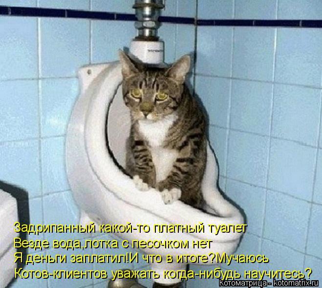 Котоматрица: Задрипанный какой-то платный туалет Везде вода,лотка с песочком нет Я деньги заплатил!И что в итоге?Мучаюсь Котов-клиентов уважать когда-ни