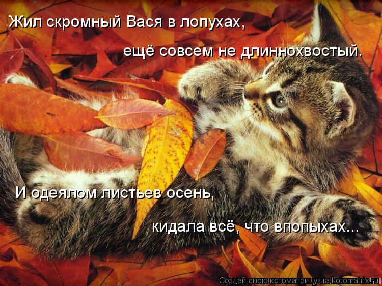 Котоматрица: Жил скромный Вася в лопухах,  ещё совсем не длиннохвостый. И одеялом листьев осень, кидала всё, что впопыхах...