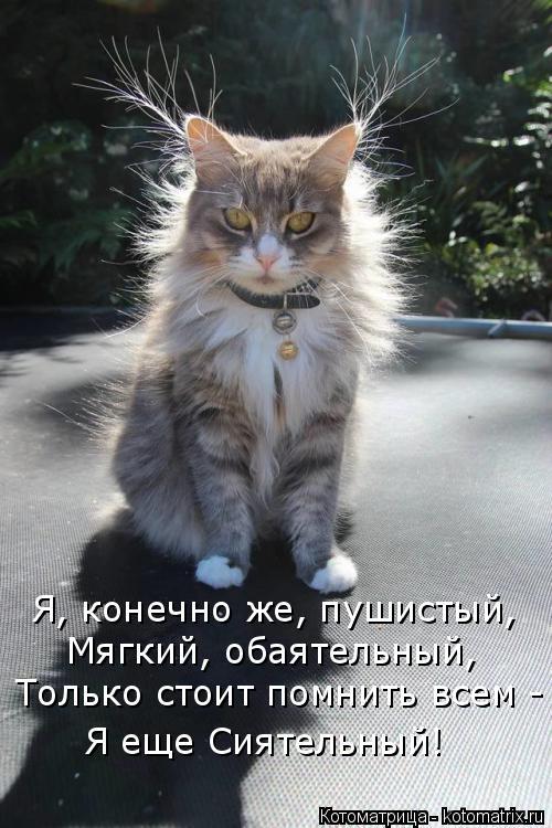 Котоматрица: Я, конечно же, пушистый,  Мягкий, обаятельный, Только стоит помнить всем - Я еще Сиятельный!
