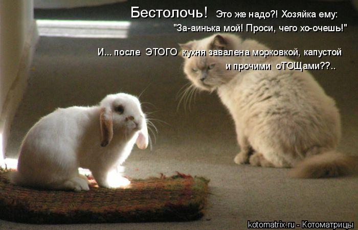 """Котоматрица: Бестолочь!  """"За-аинька мой! Проси, чего хо-очешь!"""" Это же надо?! Хозяйка ему:  И... после  ЭТОГО  кухня завалена морковкой, капустой и прочими  оТО"""