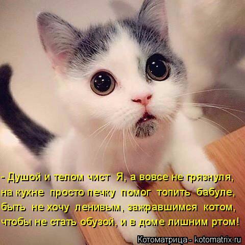 Котоматрица: - Душой и телом чист  Я, а вовсе не грязнуля,  на кухне  просто печку  помог  топить  бабуле, быть  не хочу  ленивым, зажравшимся  котом, чтобы не