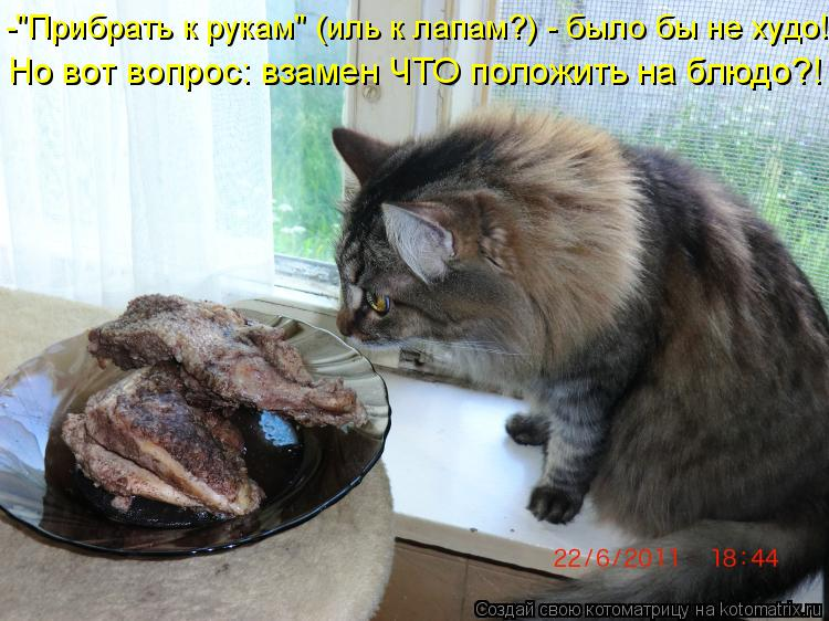 """Котоматрица: -""""Прибрать к рукам"""" (иль к лапам?) - было бы не худо! Но вот вопрос: взамен ЧТО положить на блюдо?!"""