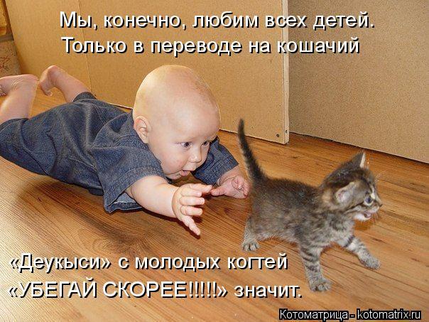 Котоматрица: Мы, конечно, любим всех детей. Только в переводе на кошачий «Деукыси» с молодых когтей «УБЕГАЙ СКОРЕЕ!!!!!» значит.