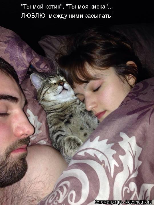 """Котоматрица: ЛЮБЛЮ  между ними засыпать! """"Ты мой котик"""", """"Ты моя киска""""..."""