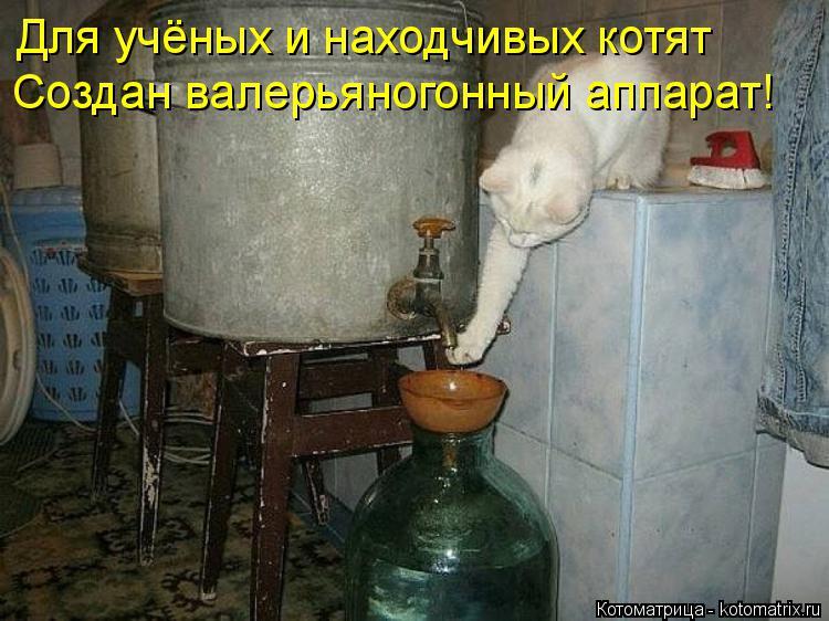 Котоматрица: Для учёных и находчивых котят Создан валерьяногонный аппарат!