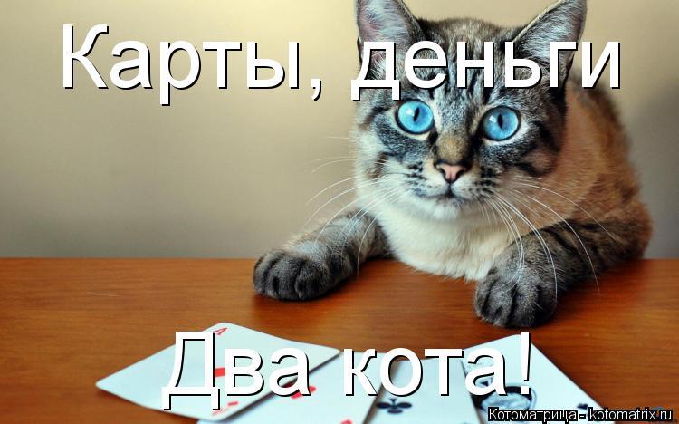 Котоматрица: Карты, деньги Два кота!