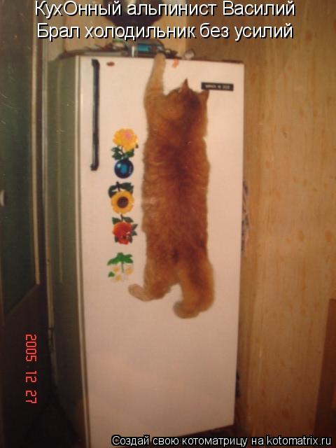 Котоматрица: КухОнный альпинист Василий Брал холодильник без усилий