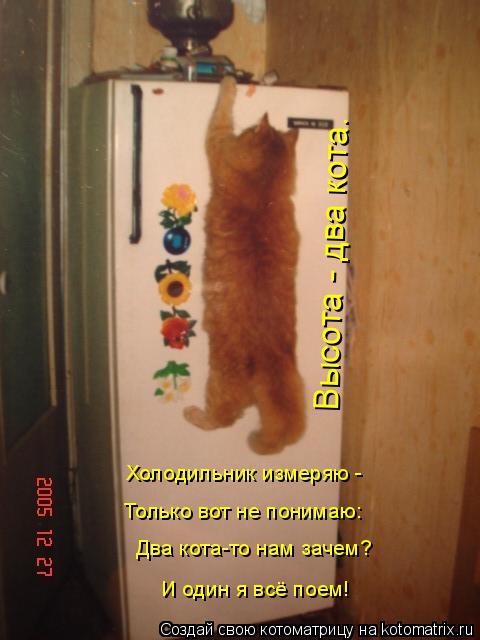 Котоматрица: Два кота-то нам зачем? И один я всё поем! Холодильник измеряю - Только вот не понимаю: Высота - два кота.
